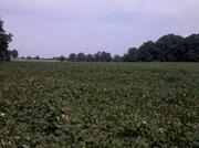 Land for sale huge plot in NC